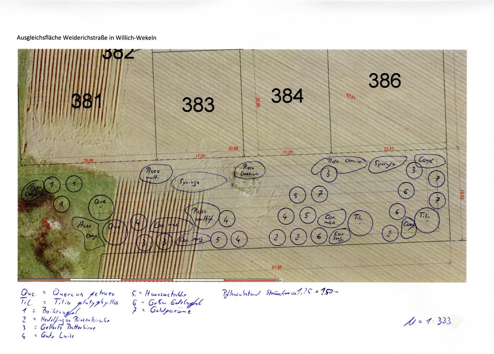 Ausführungsplanung Pflanzplan
